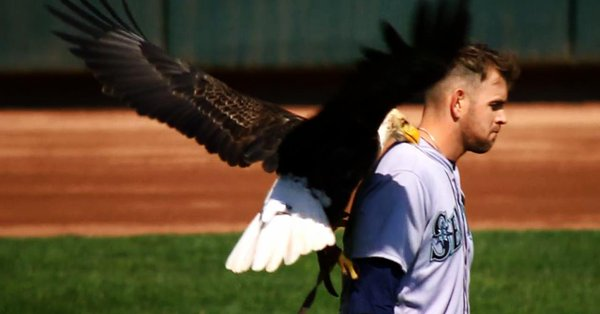 Eagle lands directly on James Paxton but he's completely unfazed