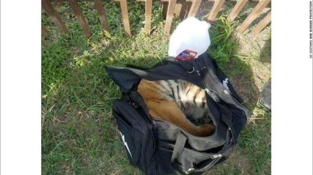 180501115635-01-border-patrol-tiger-cub-exlarge-169