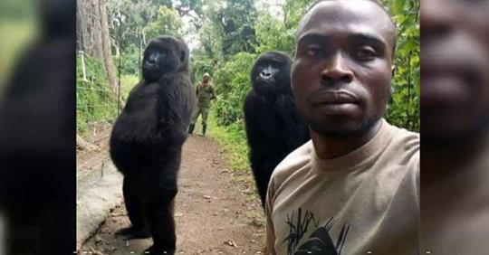 """The two orphaned gorillas in the photo are Ndakazi and Ndeze."""