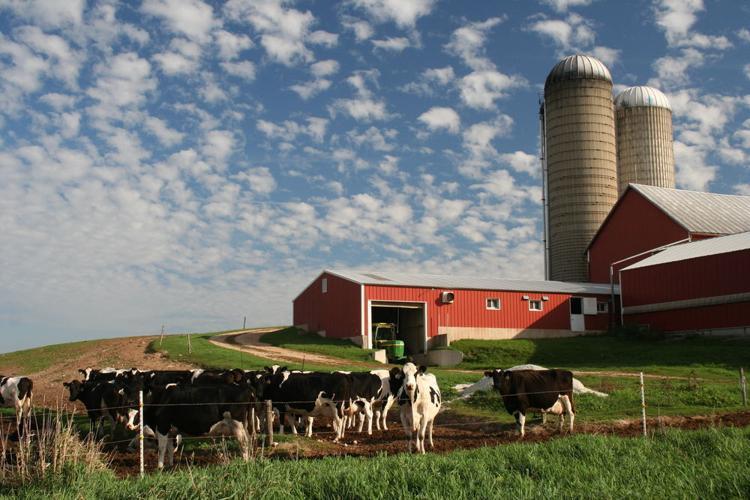Wisconsin dairy farm  Nancy Gil | Shutterstock.com