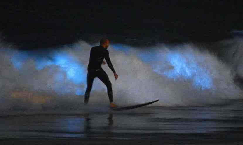 A surfer rides a wave as bioluminescent plankton lights up the surf around him, in Newport Beach, California